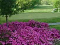 golf-course-023